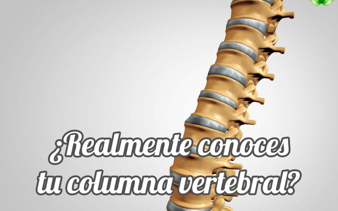 La columna vertebral: cimiento de tu salud - Alzentro