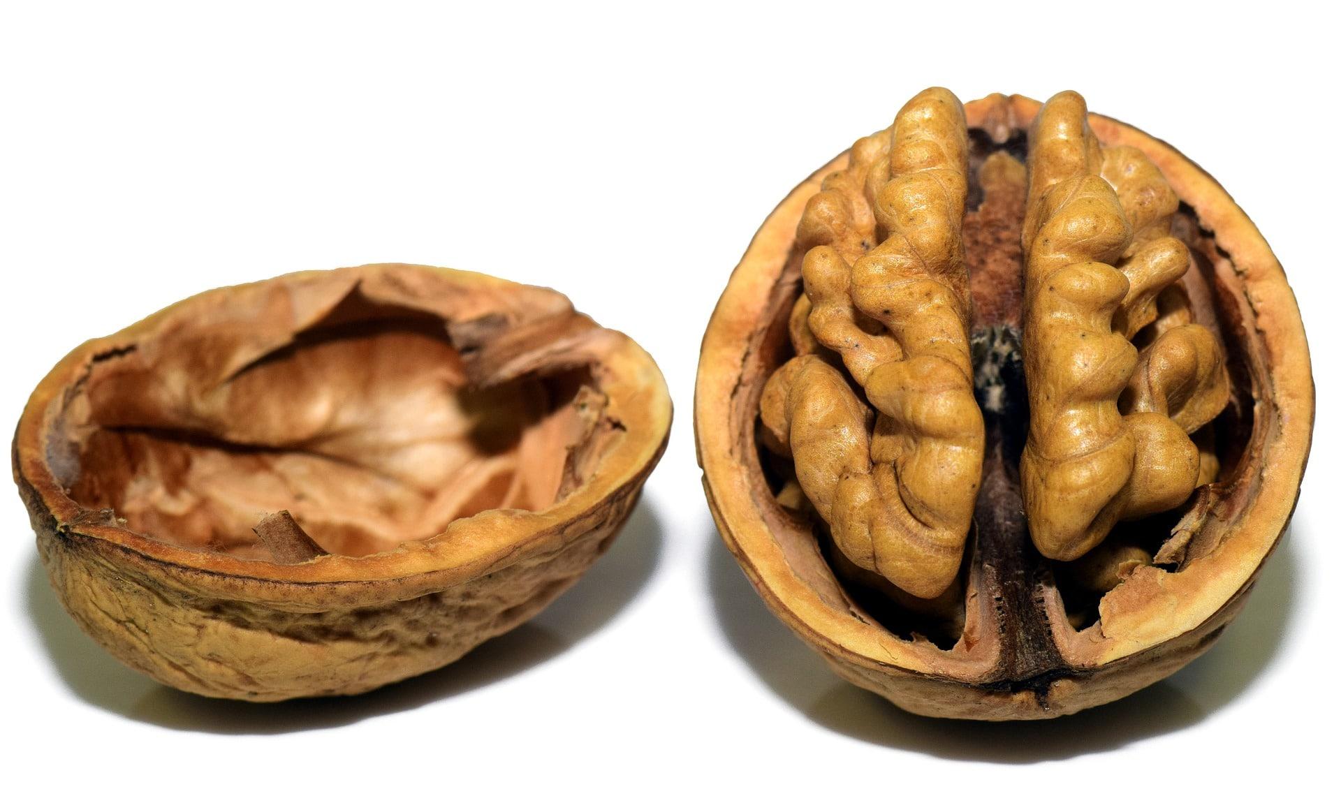 alimentos y neurogénesis